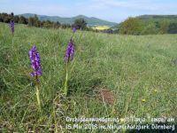 Orchiden_Wanderung_Mai_13_001
